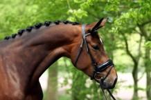 Famous (Stedinger x World Cup I) dressuurpaard van Bronno Bloem