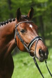 Donna Karen dressuurpaard te koop v. Lord Leatherdale